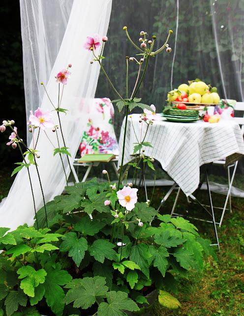 inspiration höstanemon trädgård