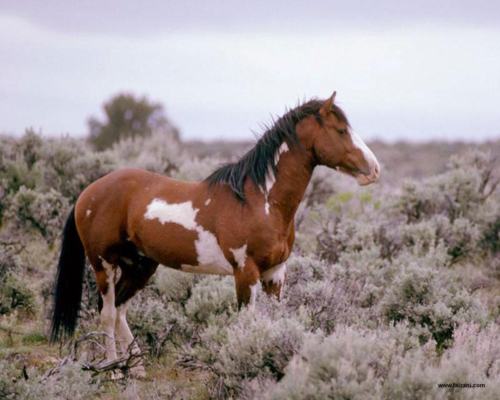 http://1.bp.blogspot.com/-hKnrBPExKlA/UYzqDUenN_I/AAAAAAAASCE/ZxM_v2zMwpw/s1600/Wildhorse+And+Foal+Wallpaper.jpg
