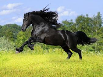 #16 Horse Wallpaper