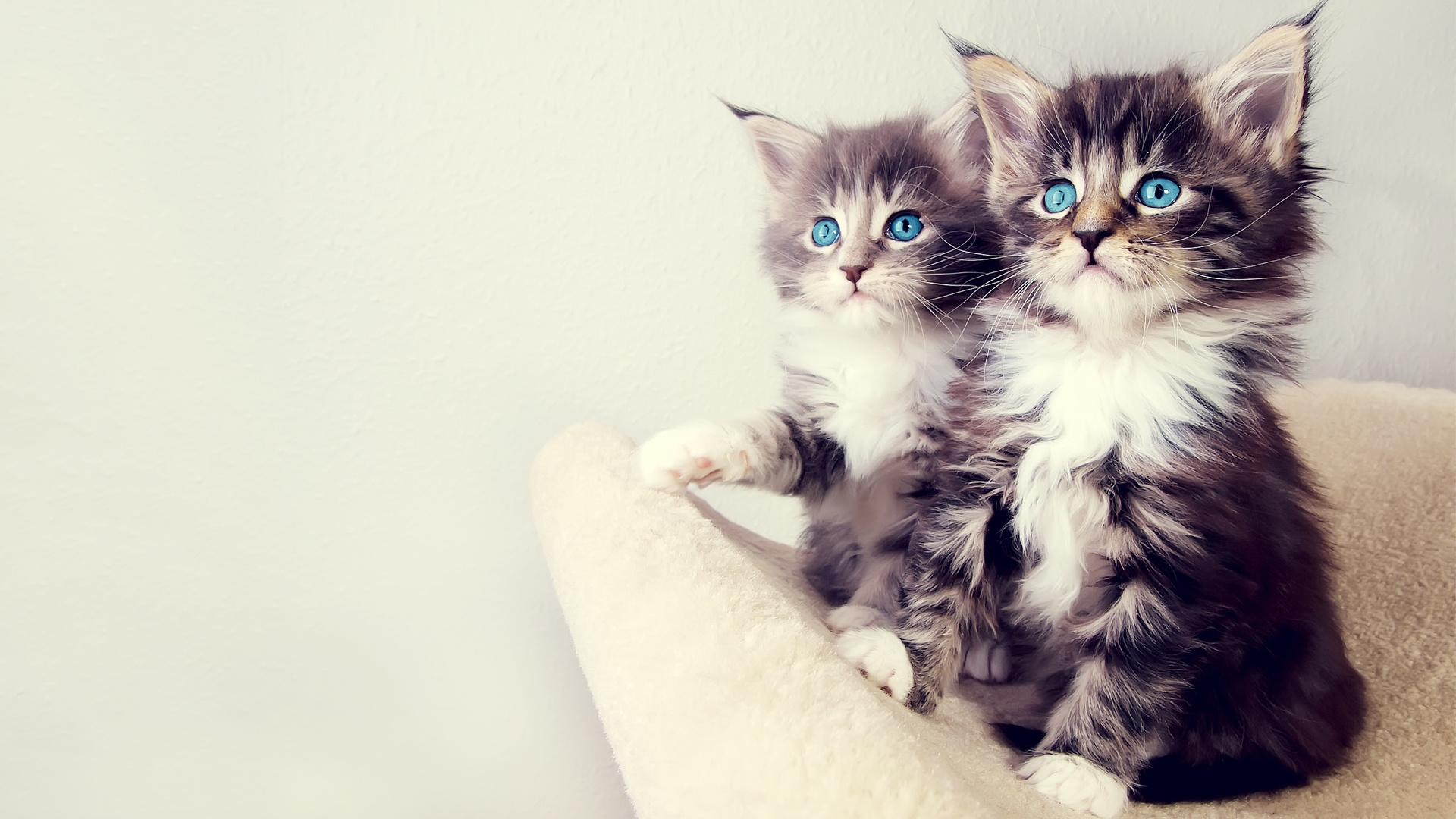 Free Wallpapers Hd Wallpapers Desktop Wallpapers Two Cute Kittens