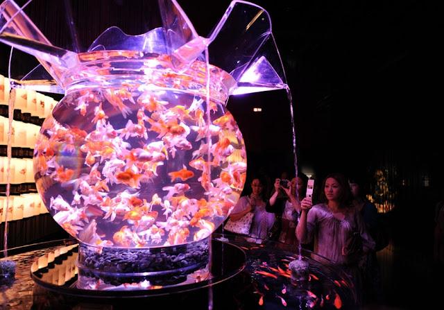 احواض السمك ... ارجوا ان تنال اعجابكم ... 11.jpg