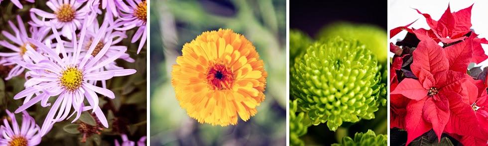 Birth Flowers - September - December © Louise Jolley