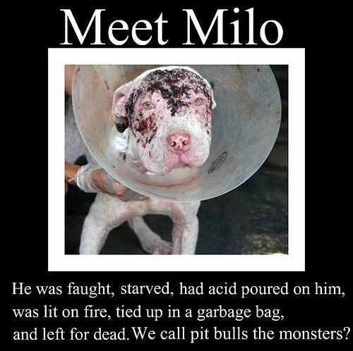 Caim Animal Rescue Network Meet Milo Cool Animal Abuse Quotes