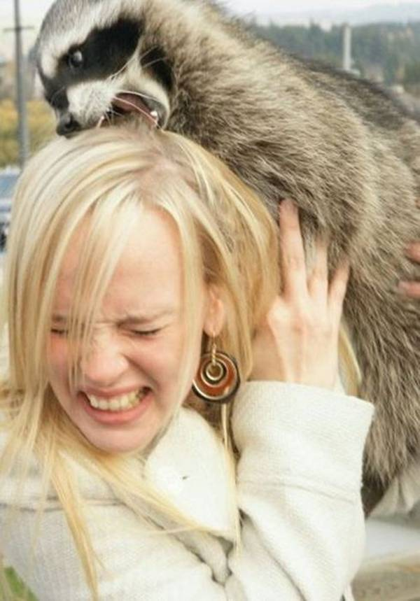 Women usually like all the cute and fluffy creature, they always want to pet them... But these creatures can be not that cute. And this is what can happen, if you try to get along with them.
