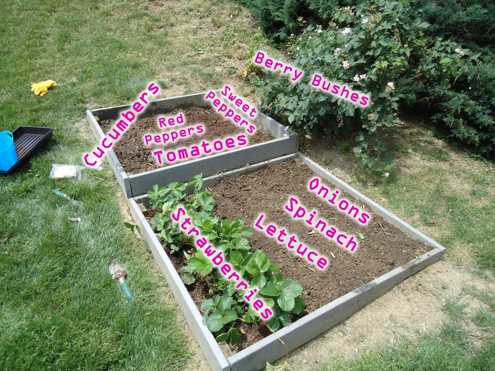 organic garden layout