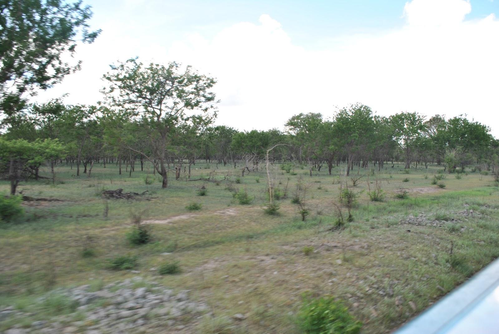 Selous Game Reserve - Tembea Tanzania Tourism blog