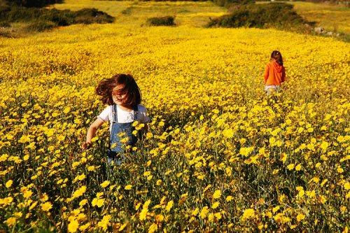 flores no jardim de deus : flores no jardim de deus:Eterno Aprendiz Espiritual: Eternas Crianças no jardim do criador