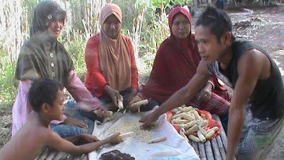 jagung untuk ditanam pada areal program