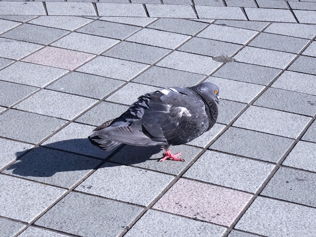 鳩,鳥,新宿駅東口〈著作権フリー無料画像〉Free Stock Photos