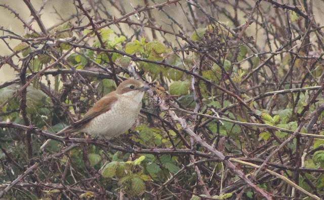 Birds, Birding, Photography, Norfolk