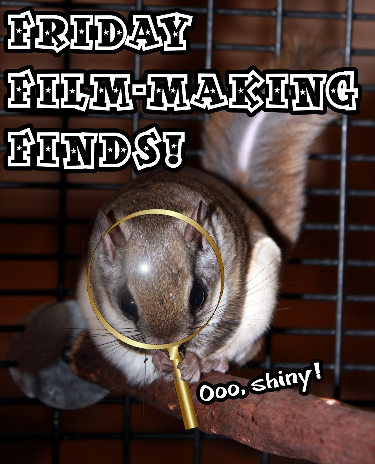 Flying squirrel sex exposed pictures
