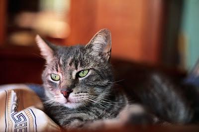 Famosos-gatos-Internet-usos-Redes Sociales