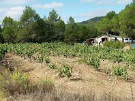 Terrenys de vinya en els Camps de la Rierola
