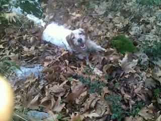 Εκλάπη θηλυκό σκυλάκι που ακούει στο όνομα Τζένη από Κορωπί.
