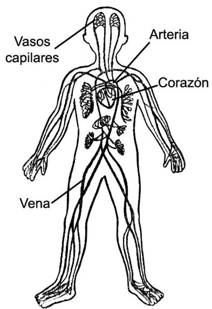 Del Sistema Oseo Para Dibujar Dibujo Del Sistema Oseo Para