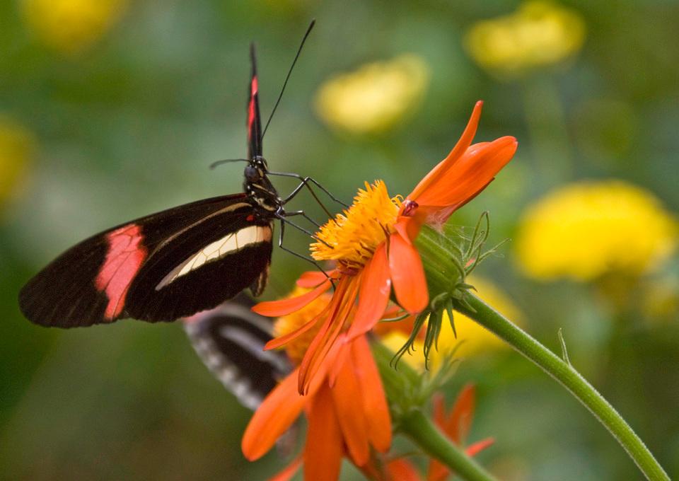 hvad er nektar
