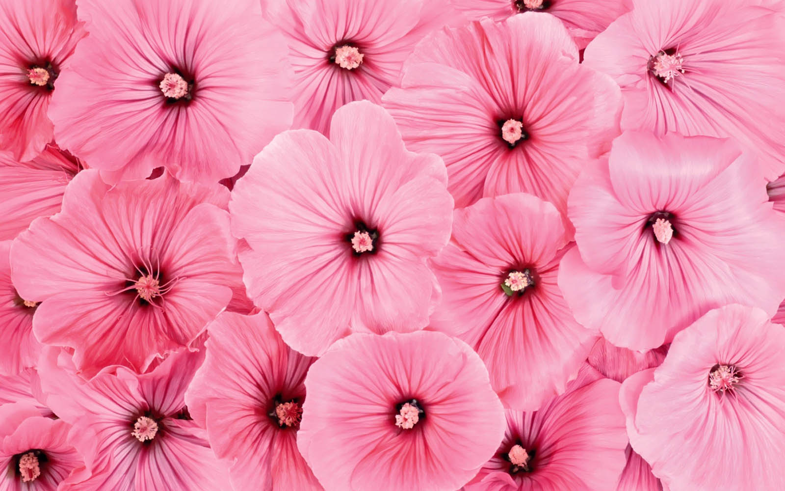 wallpaper pink flowered flower - photo #2