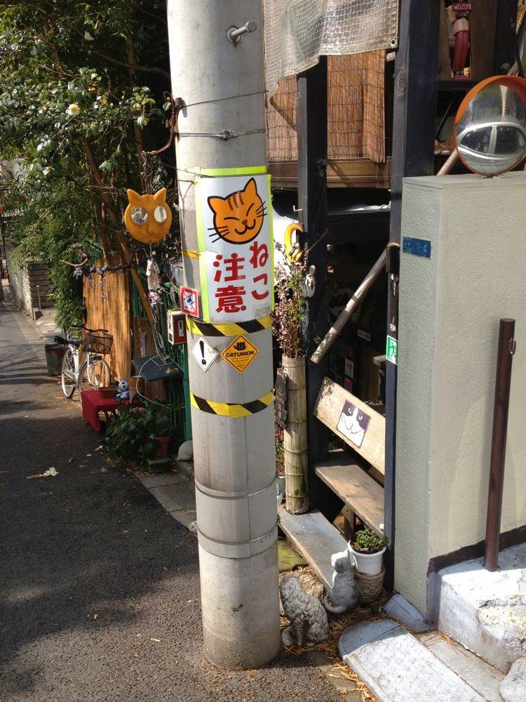 A cat café near Ueno Park