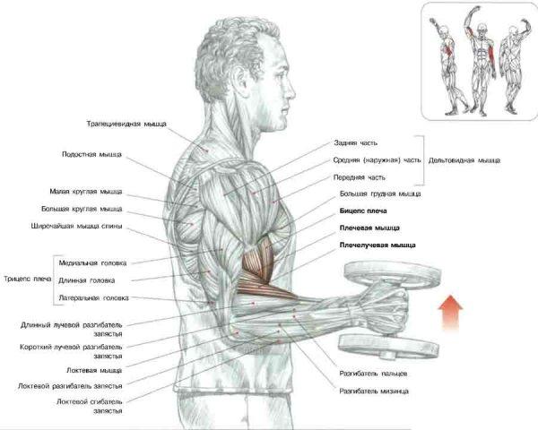 Упражнения для накачки плечевого сустава компресс ронидазой на височно-челюстной сустав