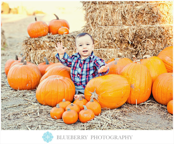 San Francisco adorable baby pumpkin patch photography