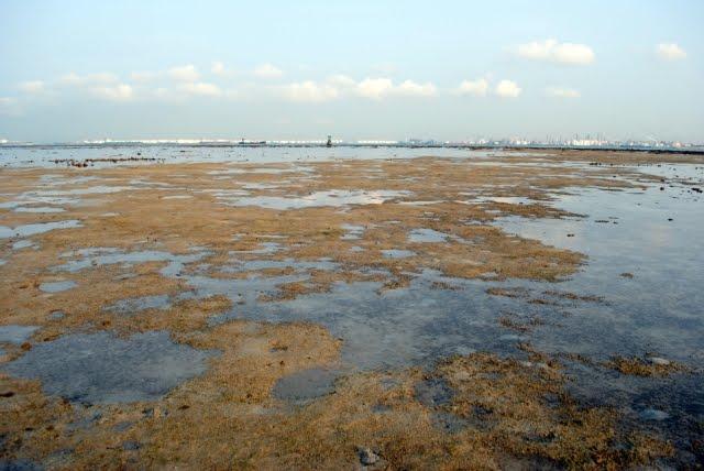 God S Wonderful Creation First Visit To Terumbu Pempang Laut