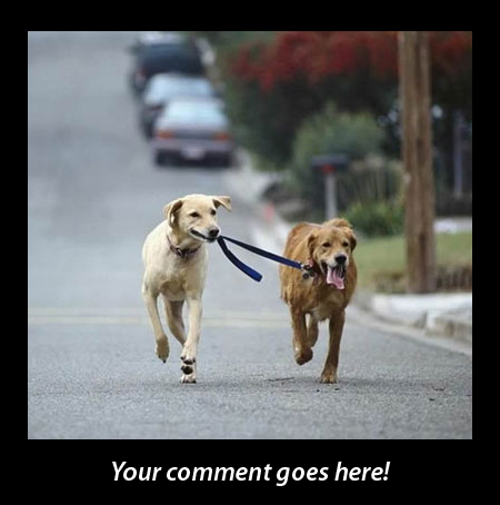 Funny Love Pictures With Captions All the funny comments,