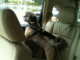 cachorrinhos no carro