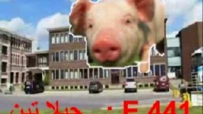زبادي دانون Danone ودانيت Danette هل بهما جيلاتين الخنزير