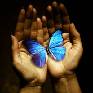 transform butterfly