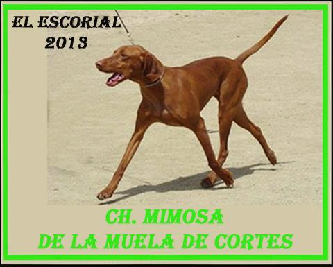 Vizsla. Mejor de Raza - El Escorial 2013.