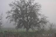 Amamantando en la Niebla