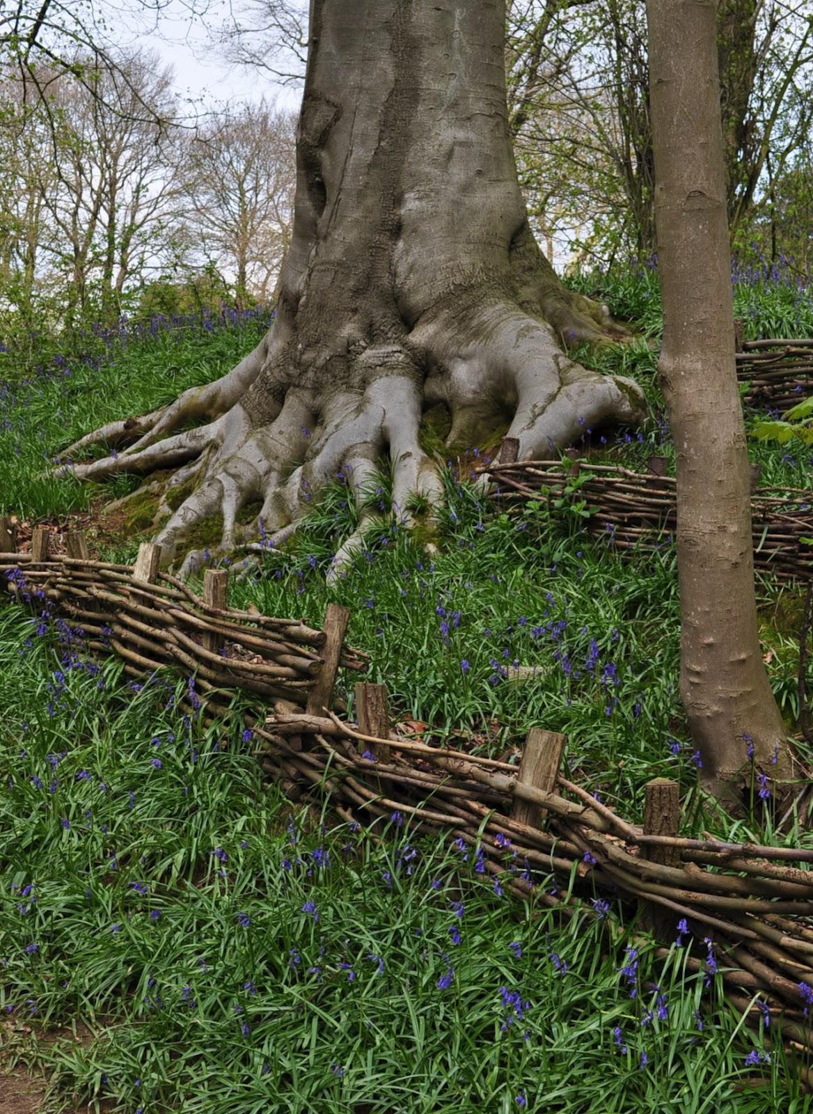 Jardin de la sauvagine printemps 2012 balade autour du for Autour du jardin