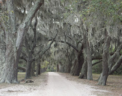 Cumberland Island: The main road