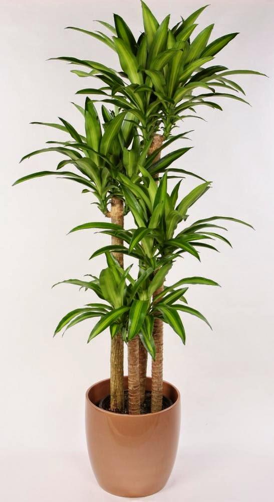 Alex i david cresc plante care purific aerul din for Plante 4 images 1 mot