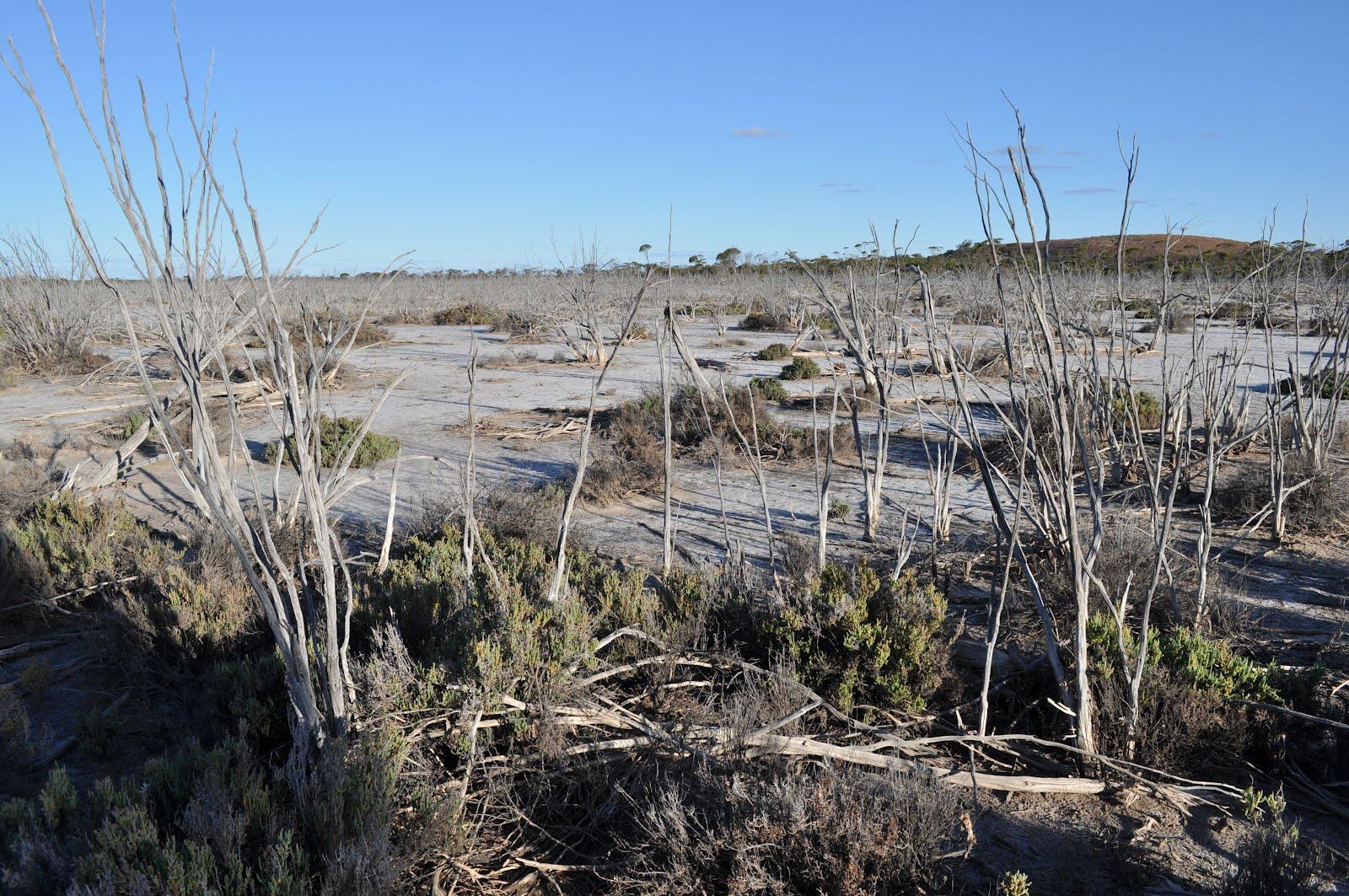 Keep the wheels spinning soil salinity in australia for Soil salinization