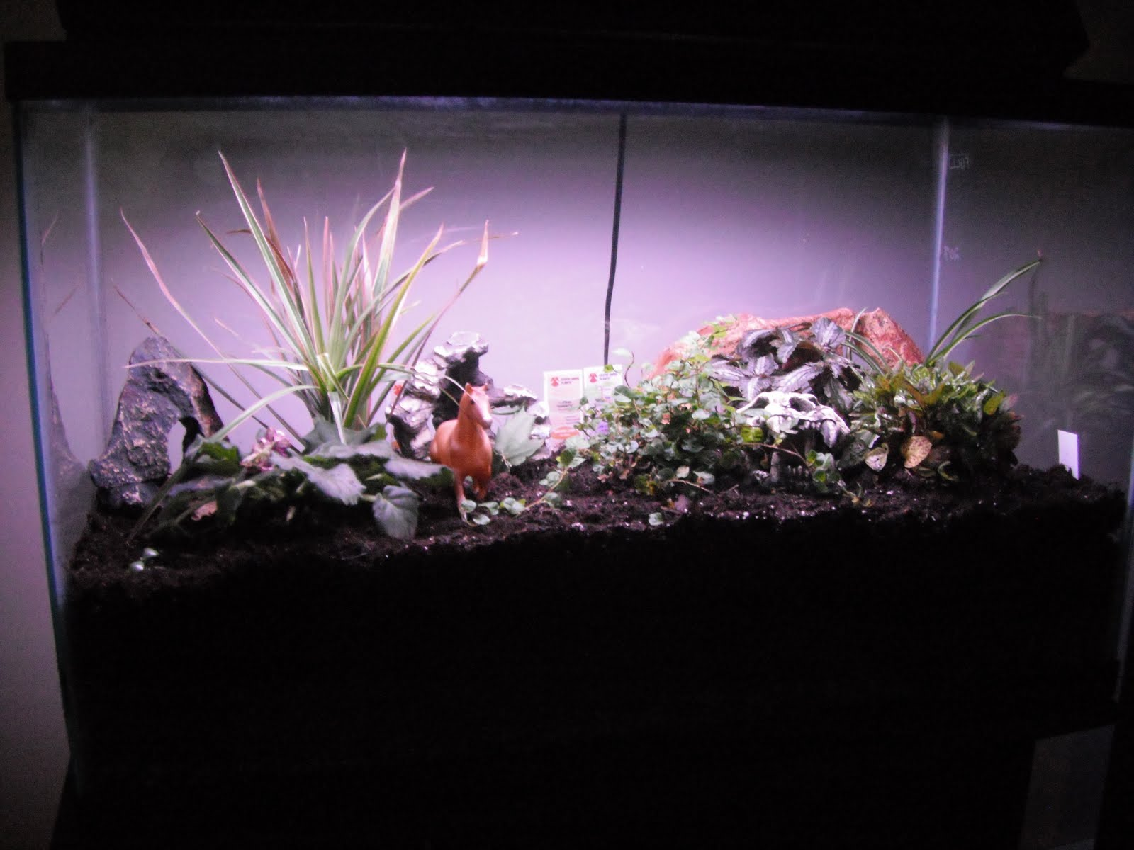 Describe happy hands in the dirt from aquarium to terrarium for Fish tank terrarium