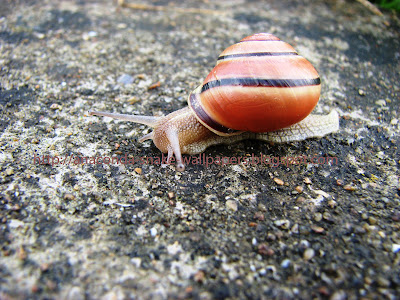 Snail on rock Mobile Wallpapers