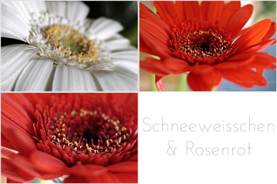 flowers schneeweisschen rosenrot mina 39 s frage. Black Bedroom Furniture Sets. Home Design Ideas