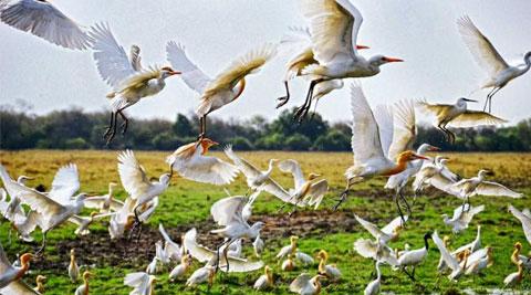 Eco Sensitive Zone Okhla Bird Sanctuary