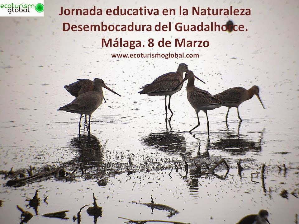 http://ecoturismoglobal.com/jornadas_y_cursos/desembocadura_guadalhorce