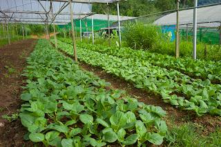 Terrar Farm Organic