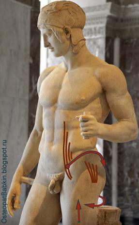 Биомеханическая адаптация опорной ноги подвздошно-поясничной мышцы (musculus iliopsoas) и малой ягодичной мышцы (musculus gluteus minimus).