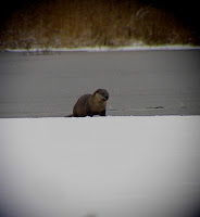 River Otter