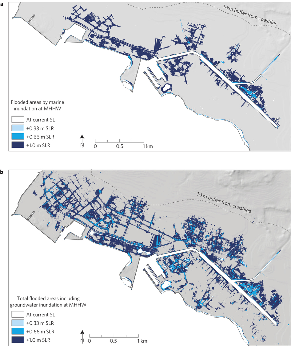 we find that 0 6 m of potential sea level rise causes substantial flooding and 1 m sea level rise inundates 10 of a 1 km wide heavily urbanized coastal
