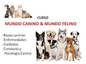 CURSO DE MUNDO CANINO Y MUNDO FELINO