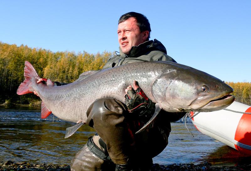 Pikefirst super taimen for Taimen fishing mongolia