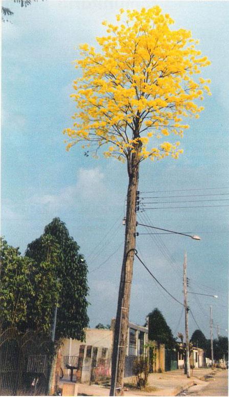 ipe de jardim familia: da árvore e passou para um poste de concreto ao lado da árvore