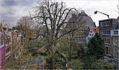 Anne Frank Tree, Belanda