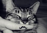 Amor felino!