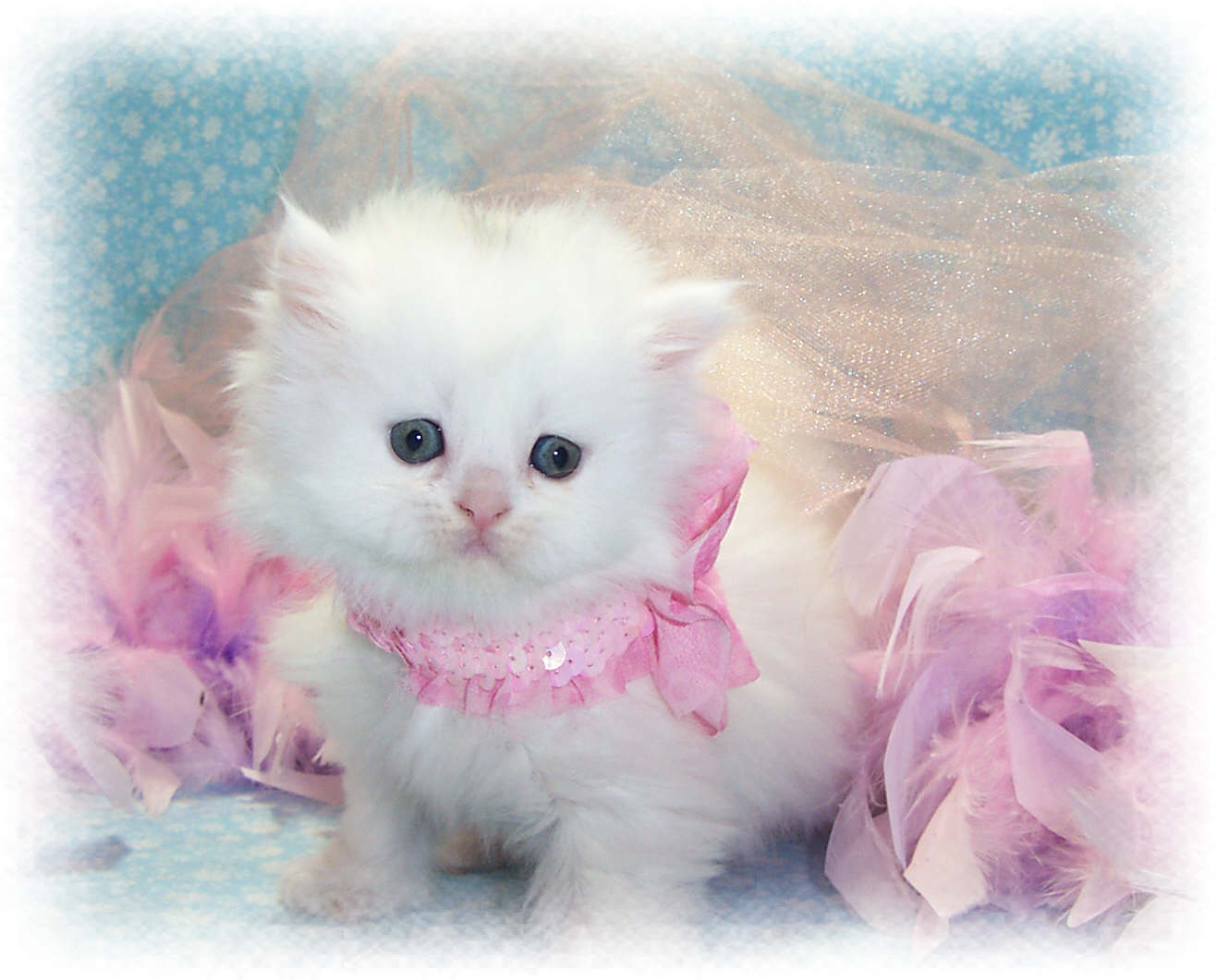Cute cats hd wallpapers wallpaper202 for Adorable wallpapers